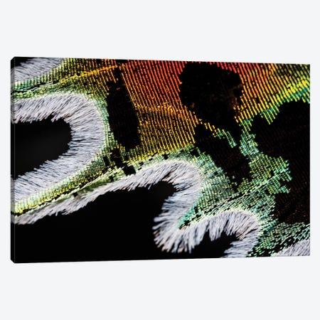 Shimmering Madagascan Sunset Moth Canvas Print #EKU66} by Elena Kulikova Canvas Art