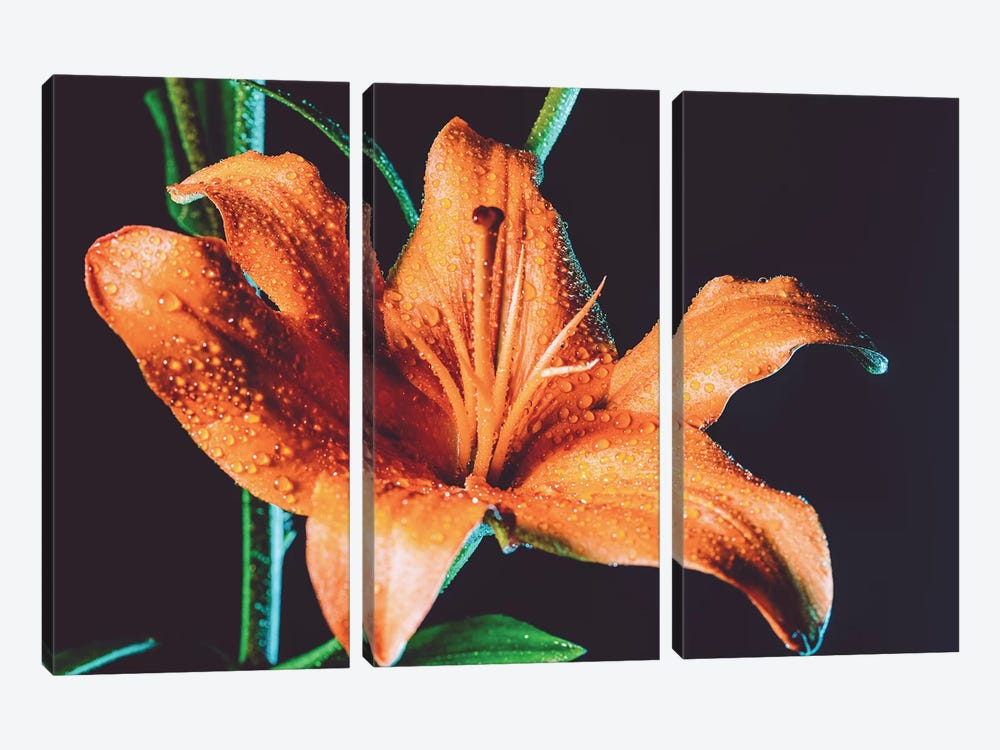 Tiger Lily Dew by Elena Kulikova 3-piece Canvas Artwork