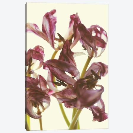 Tulip Loveliness Canvas Print #EKU80} by Elena Kulikova Art Print