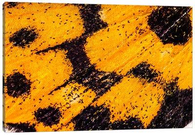 Butterfly Wings From My Garden Canvas Print #EKU88