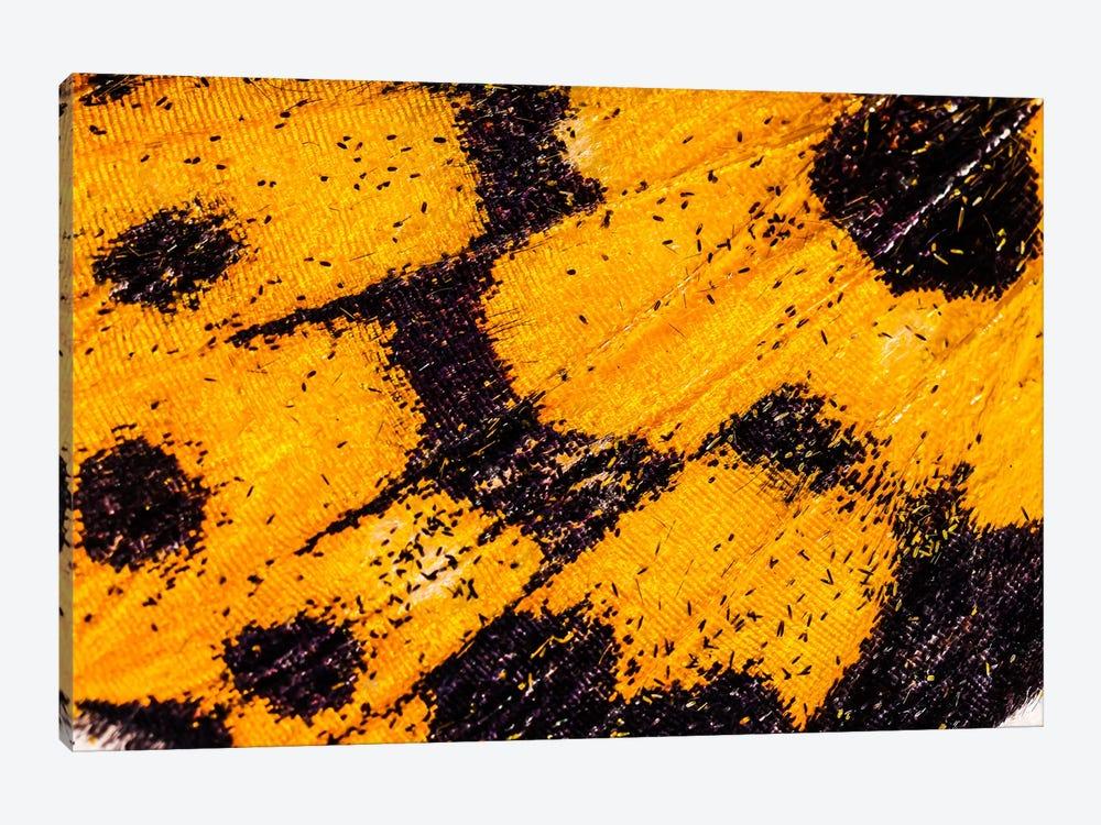 Butterfly Wings From My Garden by Elena Kulikova 1-piece Canvas Artwork