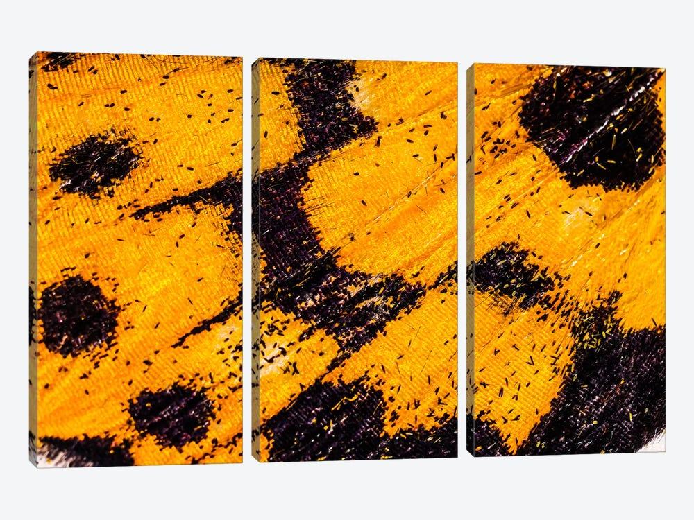 Butterfly Wings From My Garden by Elena Kulikova 3-piece Canvas Wall Art