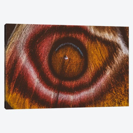 Eye See II (Madagascan Suraka Moth) Canvas Print #EKU90} by Elena Kulikova Canvas Artwork