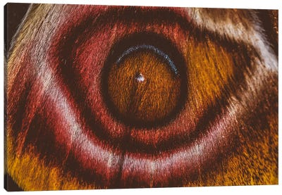 Eye See II (Madagascan Suraka Moth) Canvas Art Print