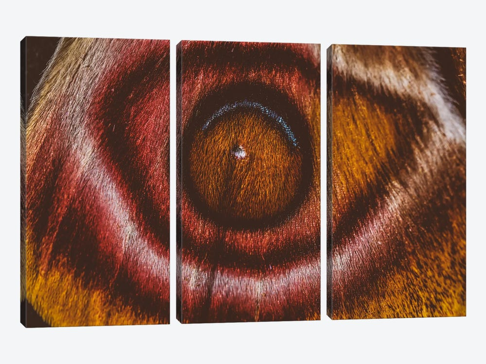 Eye See II (Madagascan Suraka Moth) by Elena Kulikova 3-piece Canvas Print