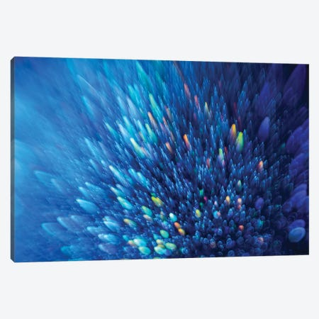 Blue Stardust Canvas Print #EKU91} by Elena Kulikova Canvas Artwork