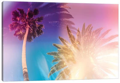 Tropical Palms Canvas Art Print
