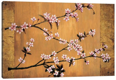 Cherry Blossoms Canvas Print #ELA11