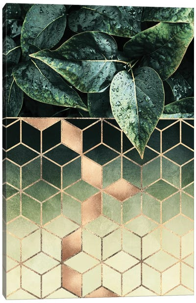 Leaves And Cubes II Canvas Art Print