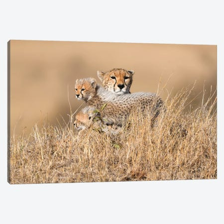 Queen Malaika With Cubs Canvas Print #ELM109} by Elmar Weiss Canvas Art Print