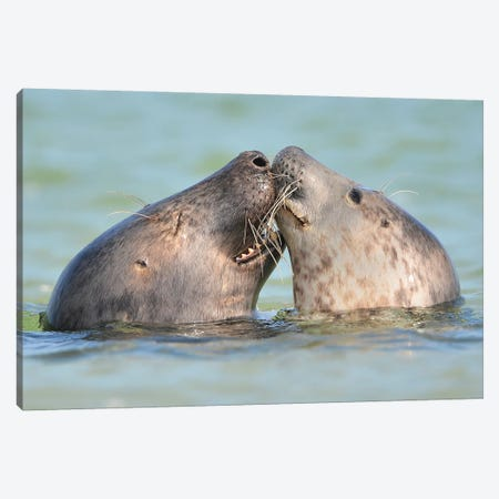 Seals In Love Canvas Print #ELM128} by Elmar Weiss Canvas Art Print