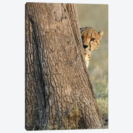 Shy Cheetah Canvas Print #ELM133} by Elmar Weiss Canvas Art