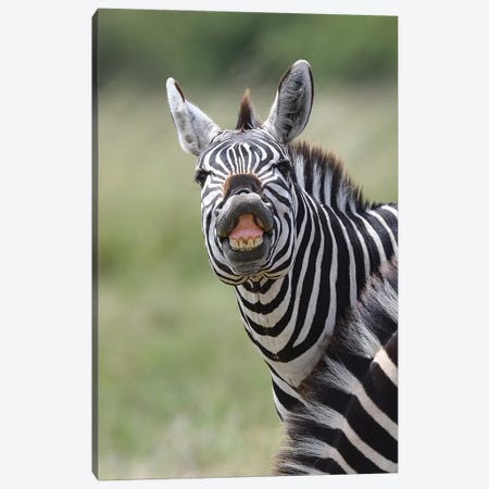 Smiling Zebra Canvas Print #ELM134} by Elmar Weiss Art Print