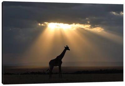 Sunset With Giraffe Canvas Art Print