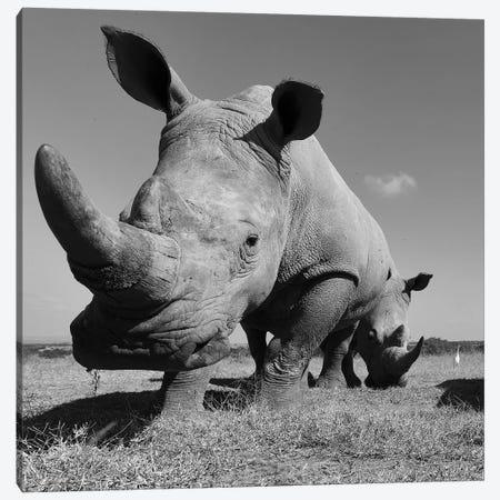 White Rhino Canvas Print #ELM160} by Elmar Weiss Canvas Print