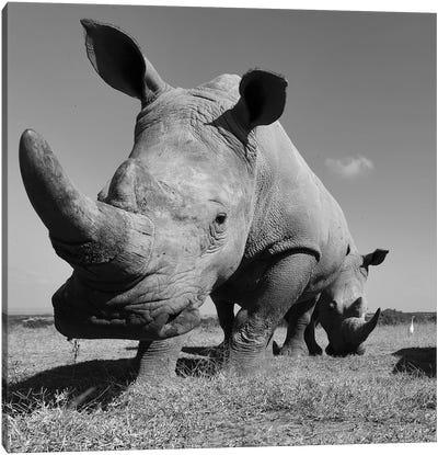 White Rhino Canvas Art Print