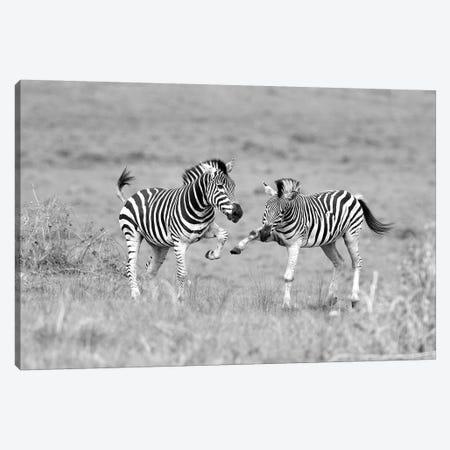 Zebras Canvas Print #ELM165} by Elmar Weiss Canvas Art