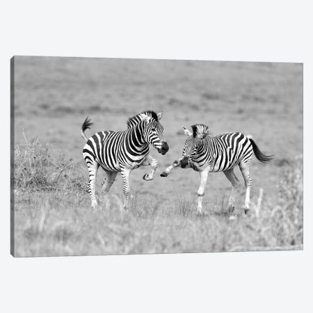 Zebras Canvas Print #ELM165} by Elmar Weiss Canvas Art