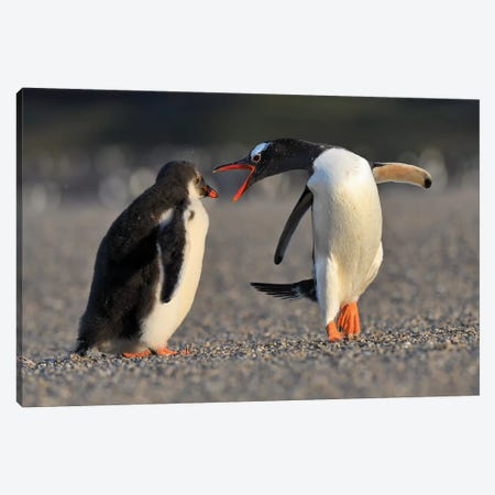 Bad Chick - Gentoo Penguin Education Canvas Print #ELM181} by Elmar Weiss Art Print
