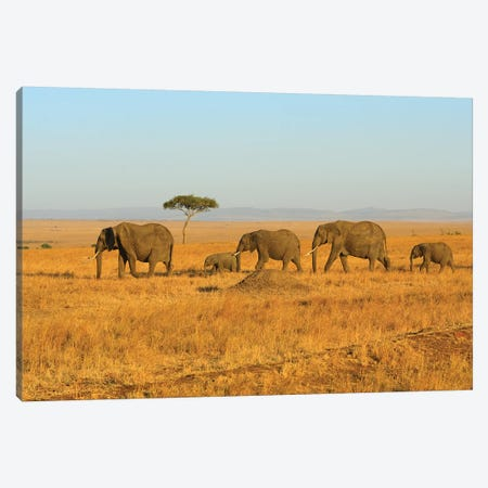 Breading Herd Of Elephants Canvas Print #ELM197} by Elmar Weiss Canvas Art Print