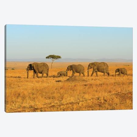 Breading Herd Of Elephants 3-Piece Canvas #ELM197} by Elmar Weiss Canvas Art Print