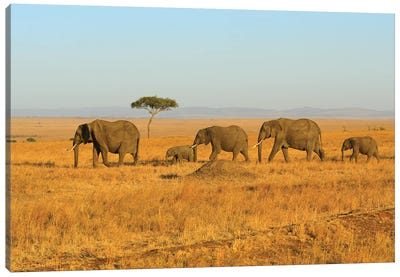 Breading Herd Of Elephants Canvas Art Print