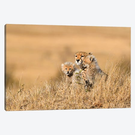 Cheetah Mother With Cubs Canvas Print #ELM205} by Elmar Weiss Art Print