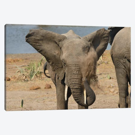 Dust Shower - Elephant Canvas Print #ELM214} by Elmar Weiss Canvas Art