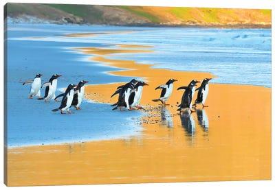 Early Birds - Gentoo Penguins Going Fishing Canvas Art Print