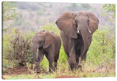 Elephant Encounter Canvas Art Print