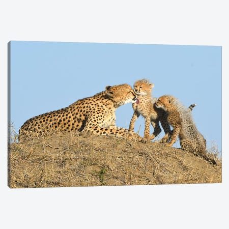 Cheetah With Cubs Canvas Print #ELM21} by Elmar Weiss Canvas Wall Art
