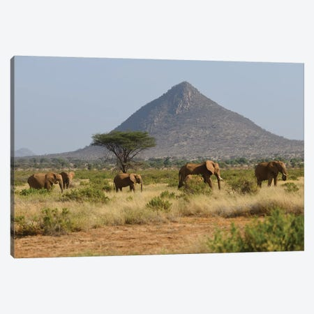 Elephant Herd In Samburu Np Canvas Print #ELM222} by Elmar Weiss Canvas Artwork