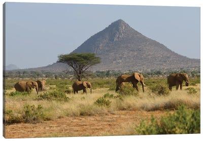 Elephant Herd In Samburu Np Canvas Art Print