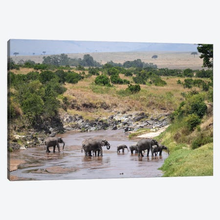 Elephants Crossing A River Canvas Print #ELM224} by Elmar Weiss Canvas Art Print