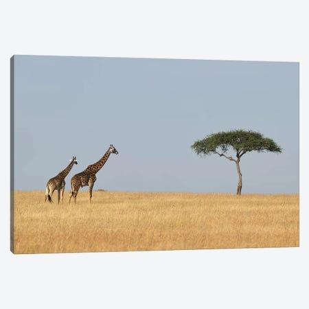 Giraffes And A Tree Canvas Print #ELM242} by Elmar Weiss Canvas Art
