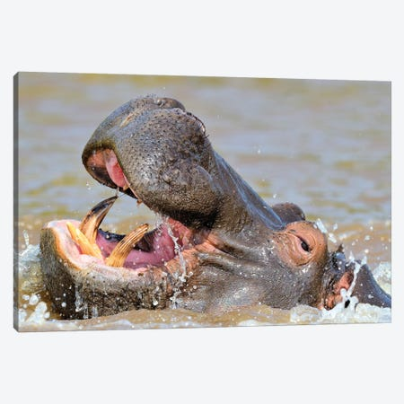 Hippo - Close Up And Personal Canvas Print #ELM259} by Elmar Weiss Art Print