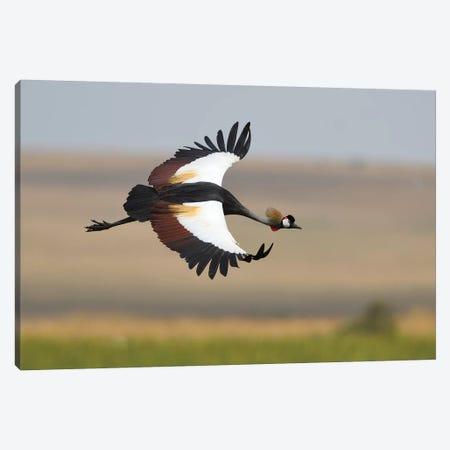 Crown Crane Canvas Print #ELM25} by Elmar Weiss Canvas Print