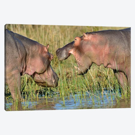 Hippo Conservation Canvas Print #ELM260} by Elmar Weiss Canvas Art