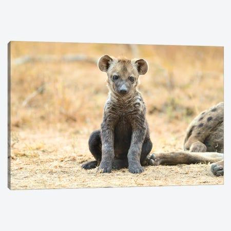 Hyaena Cub Canvas Print #ELM267} by Elmar Weiss Art Print