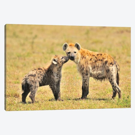 Hyaena Mom And Pup Canvas Print #ELM268} by Elmar Weiss Canvas Wall Art