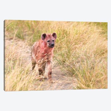 Hyena After Eating On A Kill Canvas Print #ELM270} by Elmar Weiss Canvas Art Print