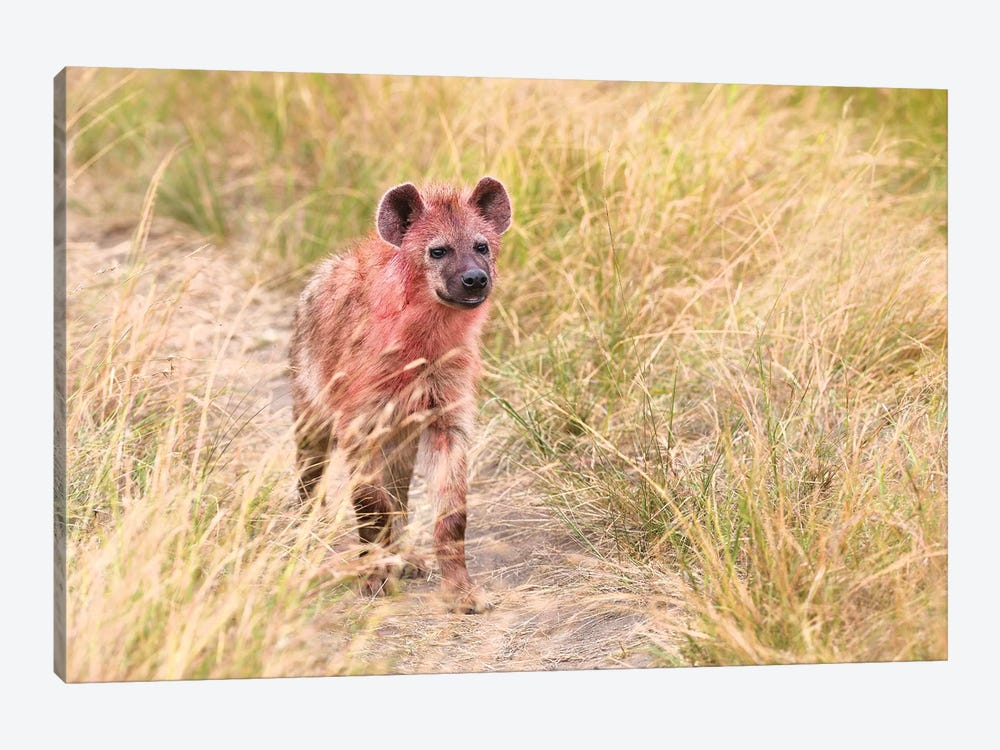 Hyena After Eating On A Kill by Elmar Weiss 1-piece Canvas Artwork