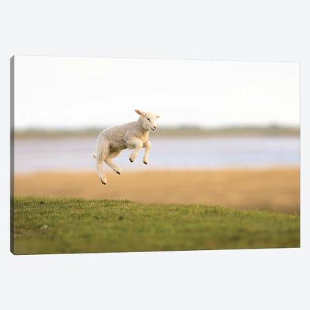 Jumping Lamb I 3-Piece Canvas #ELM275} by Elmar Weiss Canvas Art