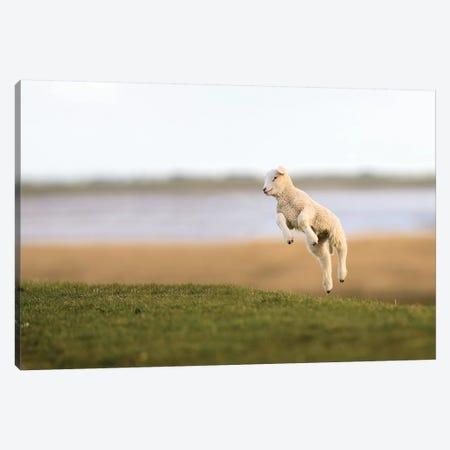 Jumping Lamb II Canvas Print #ELM276} by Elmar Weiss Canvas Artwork