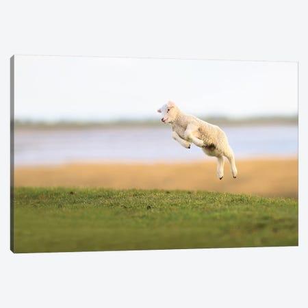 Jumping Lamb III Canvas Print #ELM277} by Elmar Weiss Canvas Art