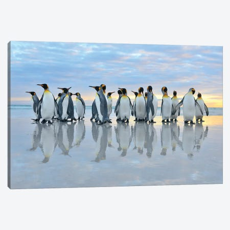 King Penguins Reflection Canvas Print #ELM291} by Elmar Weiss Canvas Print
