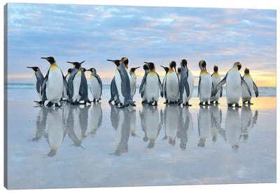 King Penguins Reflection Canvas Art Print