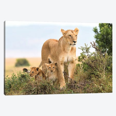 Liones Yaya With Cubs Canvas Print #ELM302} by Elmar Weiss Canvas Print