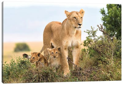 Liones Yaya With Cubs Canvas Art Print