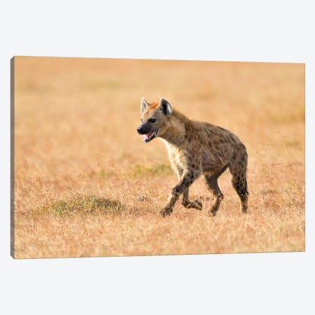 Exhausted Hyena Canvas Print #ELM307} by Elmar Weiss Canvas Art